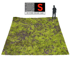 3d forest ground 16k hd model