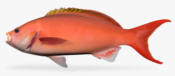 3d atlantic creolefish
