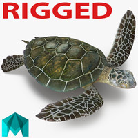 Sea Turtle Rigged for Maya