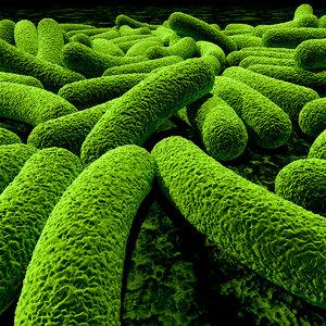 bacteria 3d max