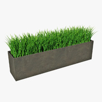 Grass in pot 02