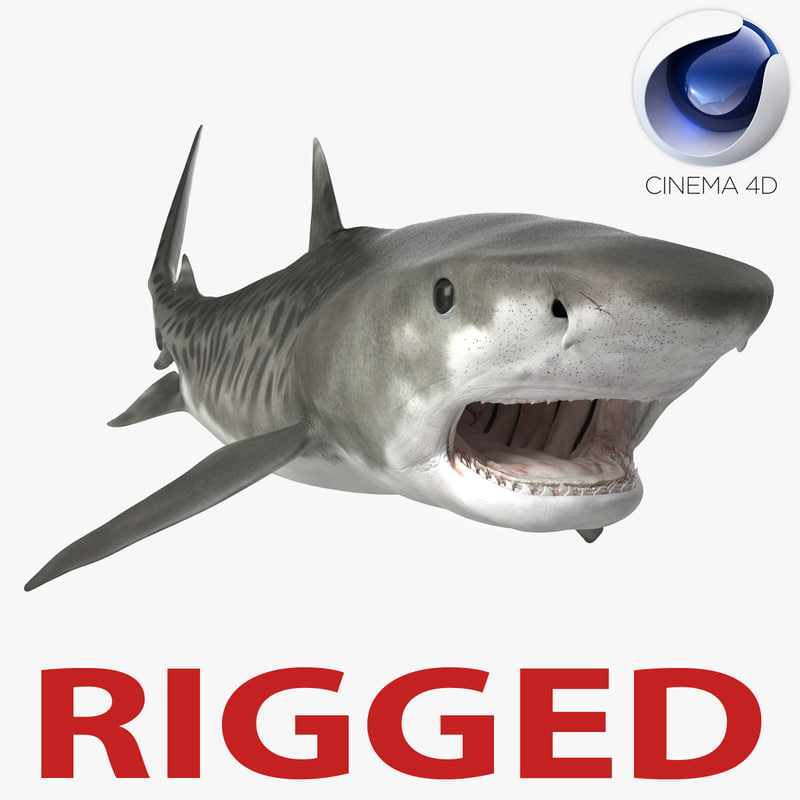 Tiger Shark Rigged for Cinema 4D