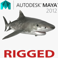 ma tiger shark rigged