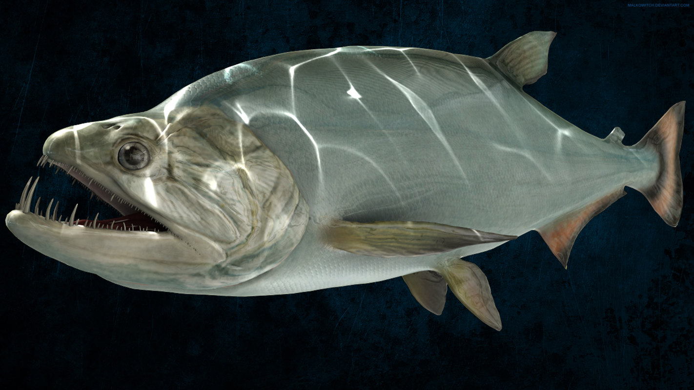 3d model of payara vampire fish for Photos of fish