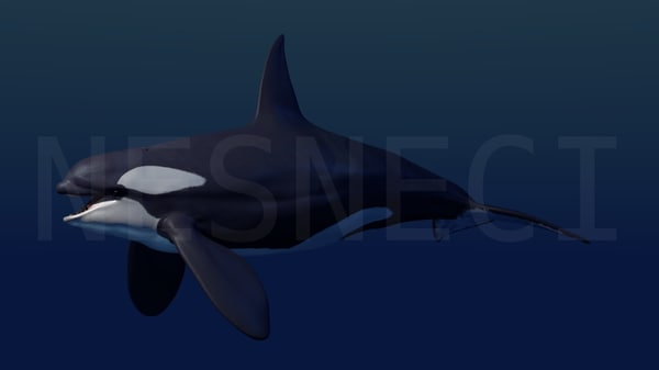 professionally killer whale orca 3d model