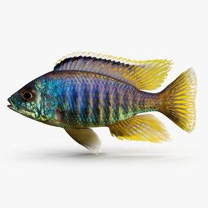 placidochromis cichlid 3d 3ds