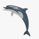 Common Bottlenose Dolphin(Tursiops Truncatus)