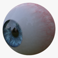 Realistic Human Eyeball Model