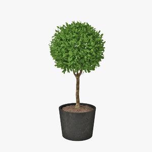 shrub pots 3d obj