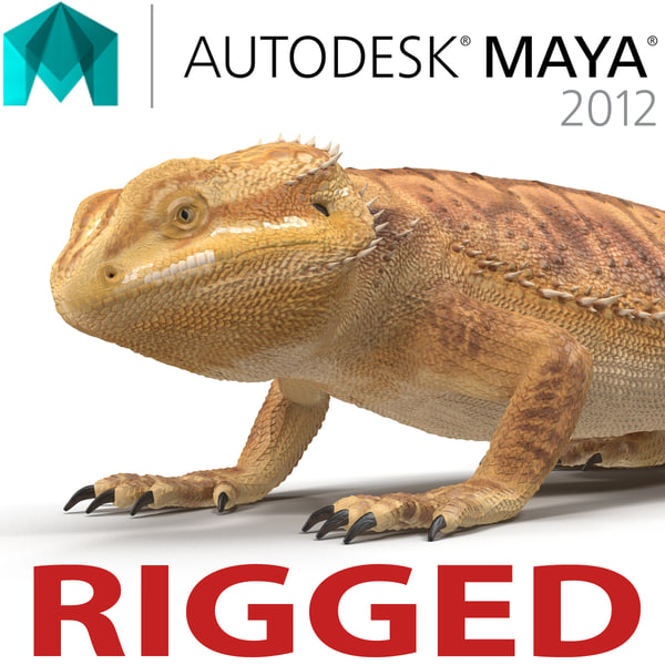 bearded dragon rigged ma