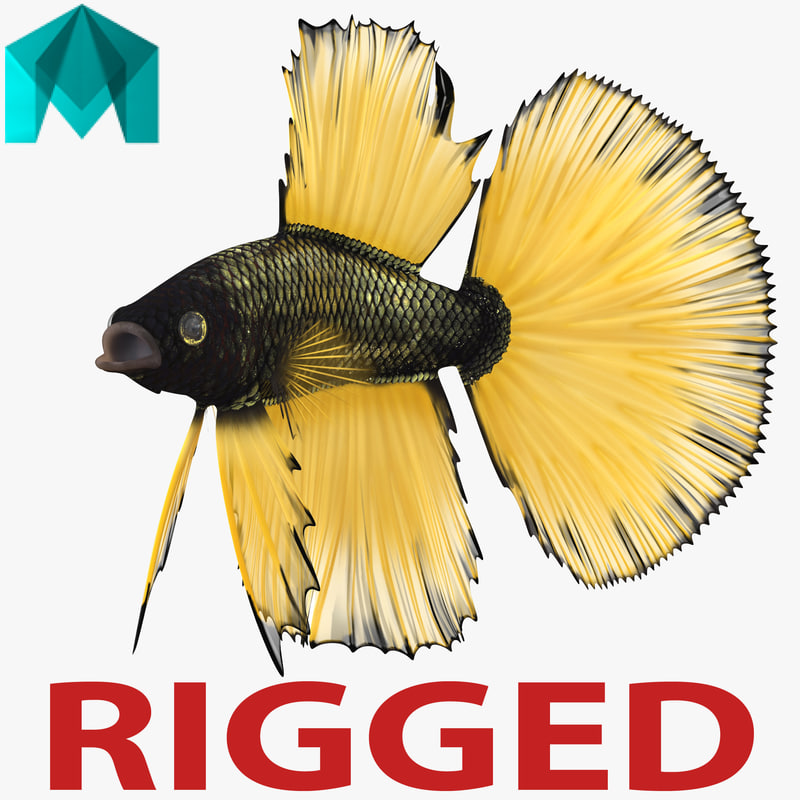 betta fish rigged 3d ma
