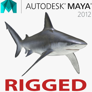 bignose shark rigged 3d model