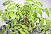 plants bast ready 3d model