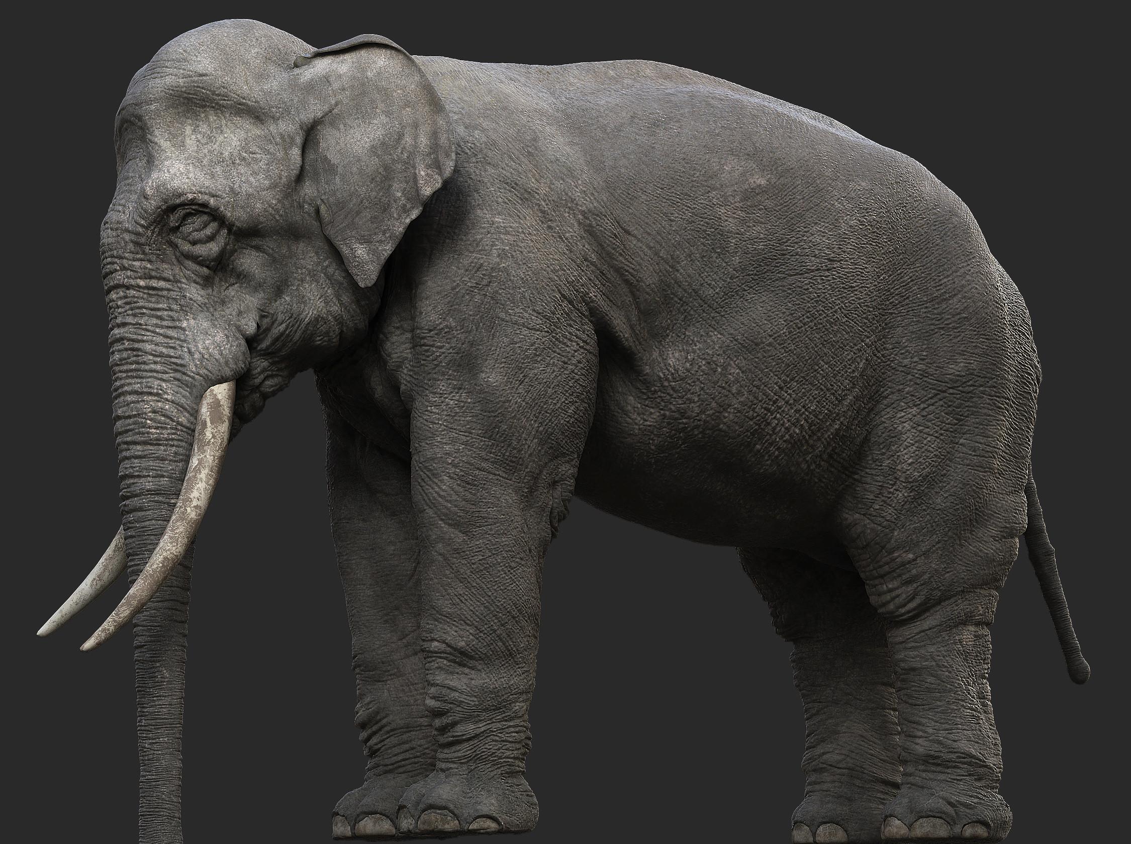 3d model elephant elephant1