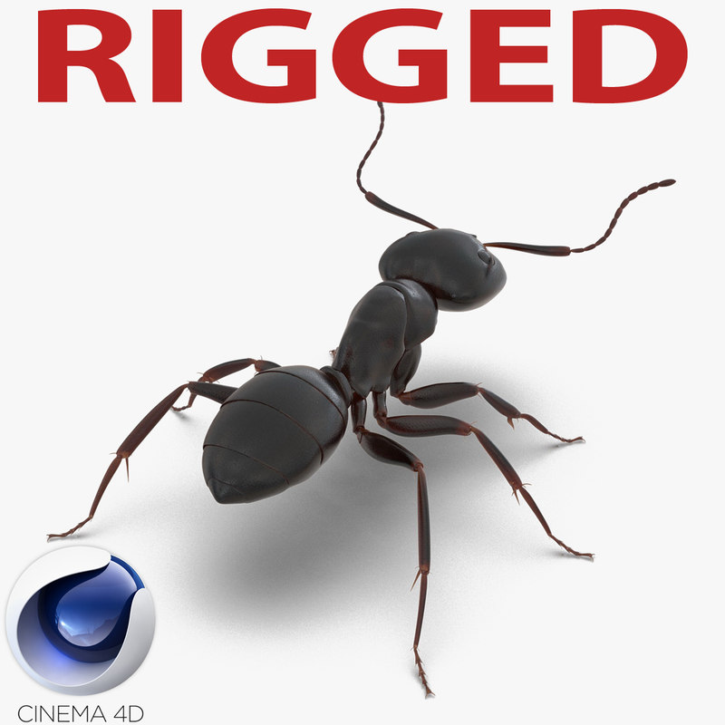 black ant rigged 3d c4d