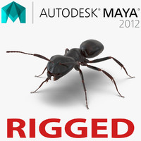 3d model black ant rigged