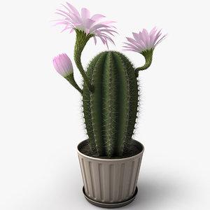 flowering cactus 3d model