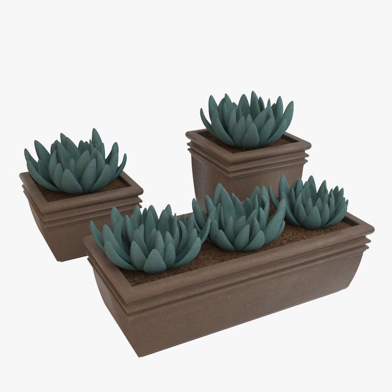 maya decorative pot plant