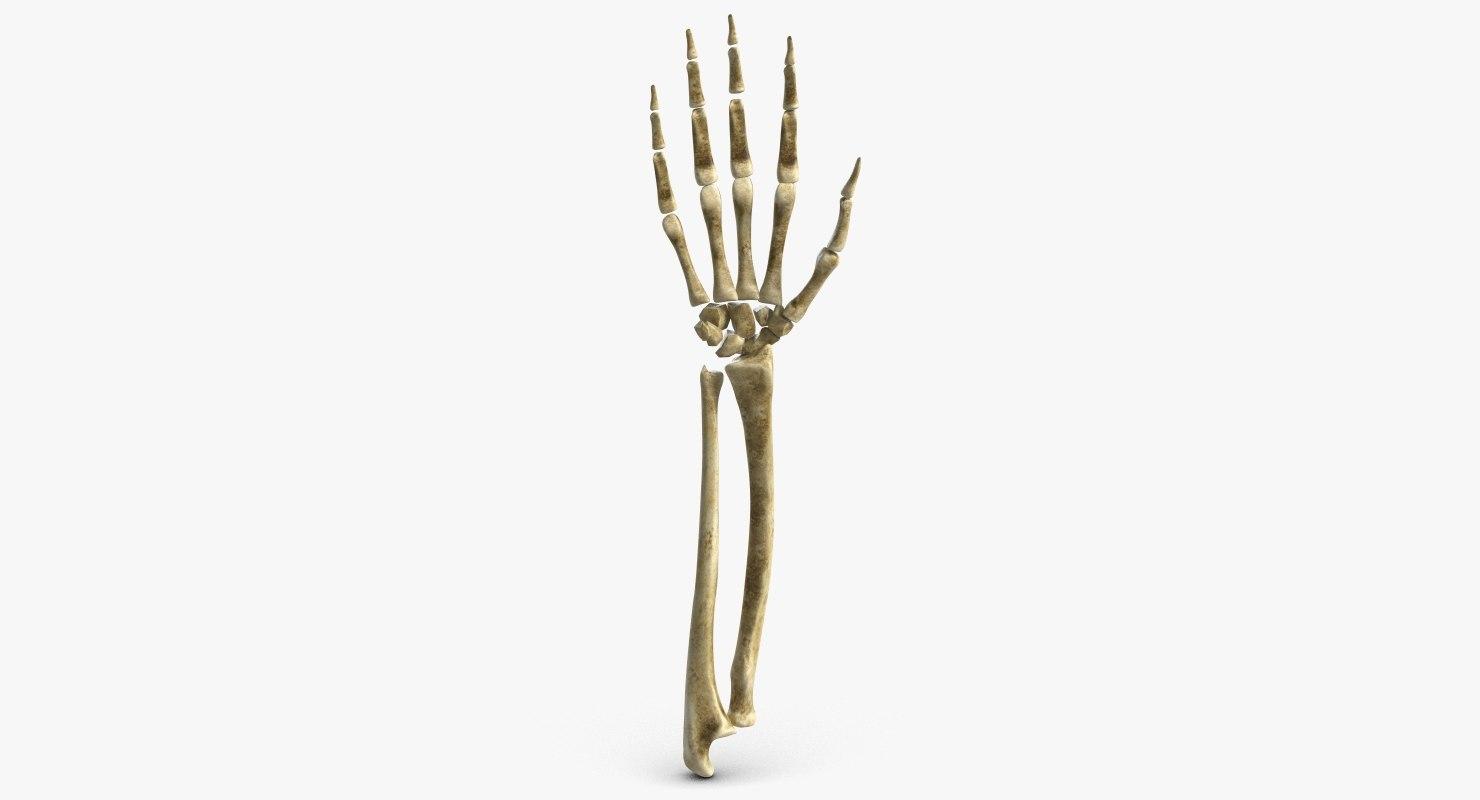 arm skeleton 3d 3ds