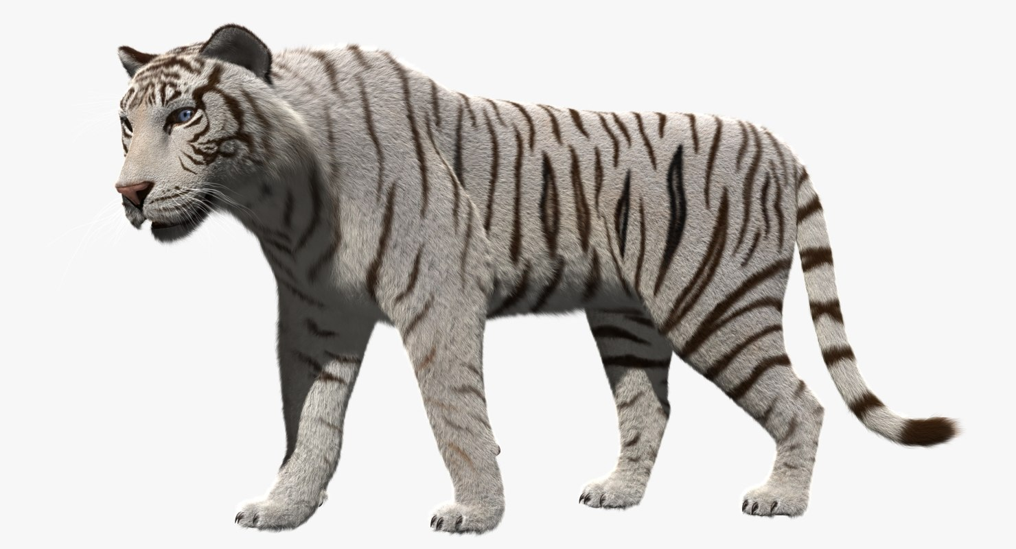 white tiger 3d obj