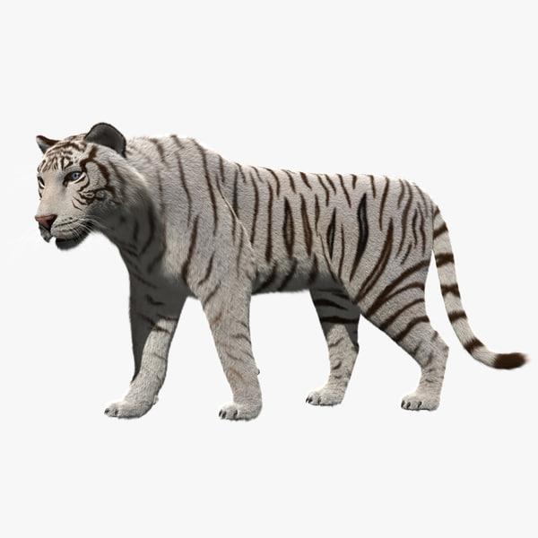 white tiger 3d obj