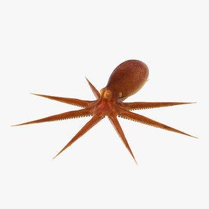 3d octopus realistic model