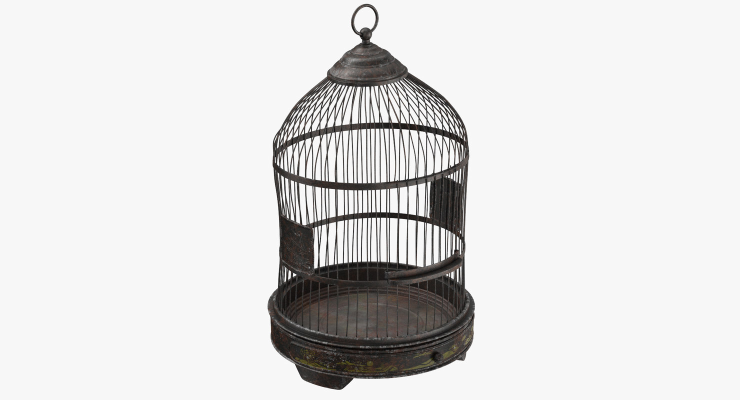 old bird cage max