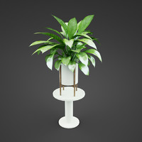 house spathiphyllum plant max