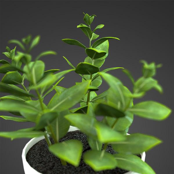 3d zamioculcas plant home model