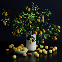 bottle kumquat plums flowers 3d model