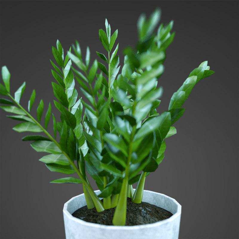 plant home barleria 3d max