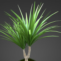 plant home yucca 3d model