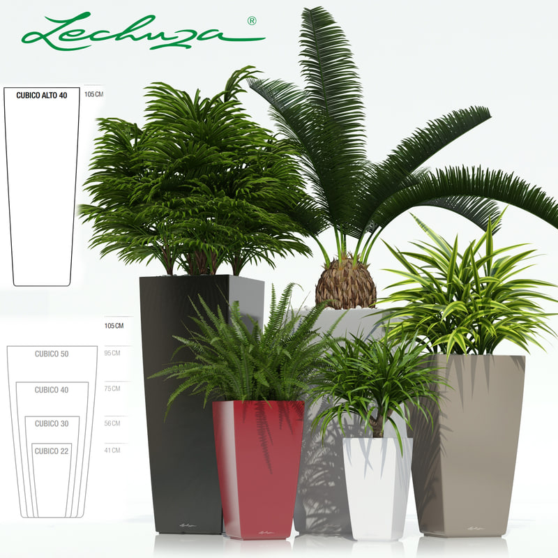 3d model of plants lechuza cubico