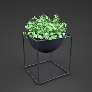 fbx plant home ficus