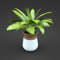 plant home spathiph 3d max
