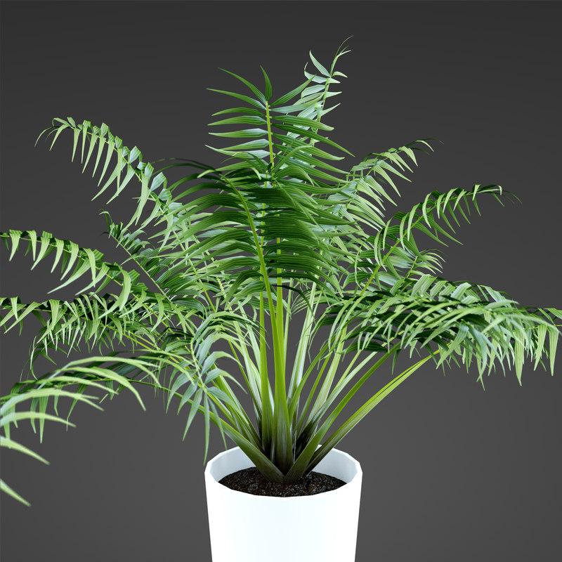 plant home phoenix 3d model