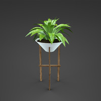 plant home curcuma 3d obj