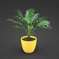 plant home areca 3d max