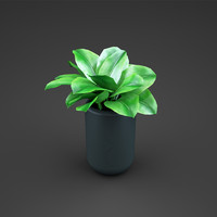 c4d plant home