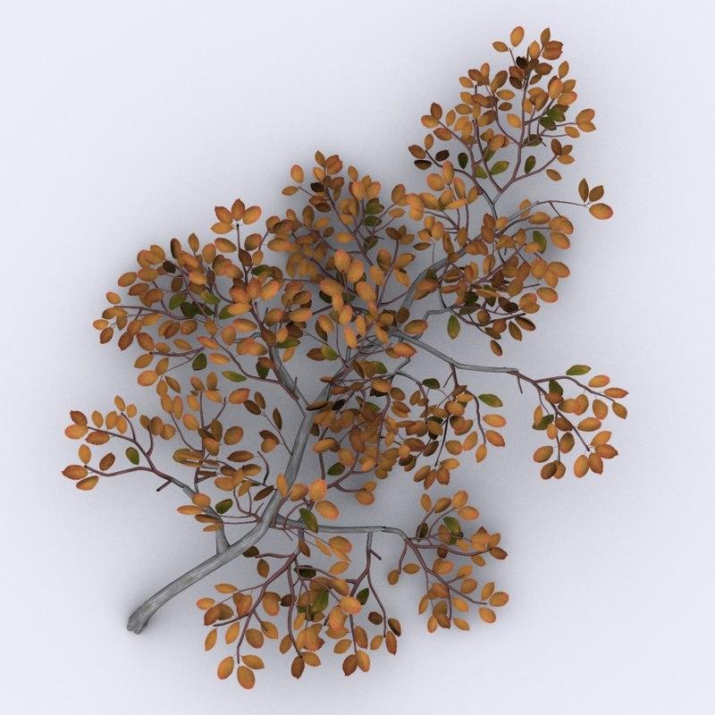 arctic willow tree 3d model