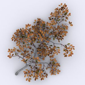 arctic willow tree 3d model