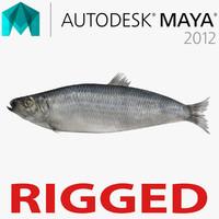 Herring Fish Rigged for Maya