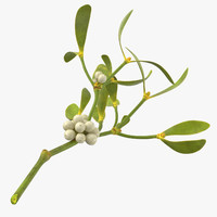 3d model mistletoe sprig