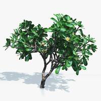flowering frangipani tree 3d dxf