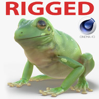 Australian Green Tree Frog Rigged for Cinema 4D