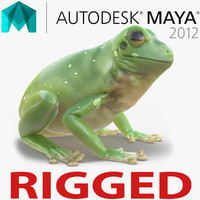 australian green tree frog 3d ma