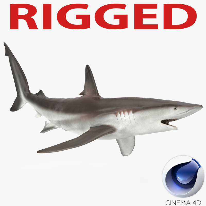 3d model whaler shark rigged