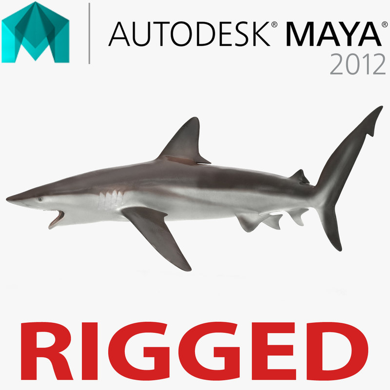 whaler shark rigged ma
