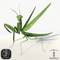 3d model realistic mantis rig praying