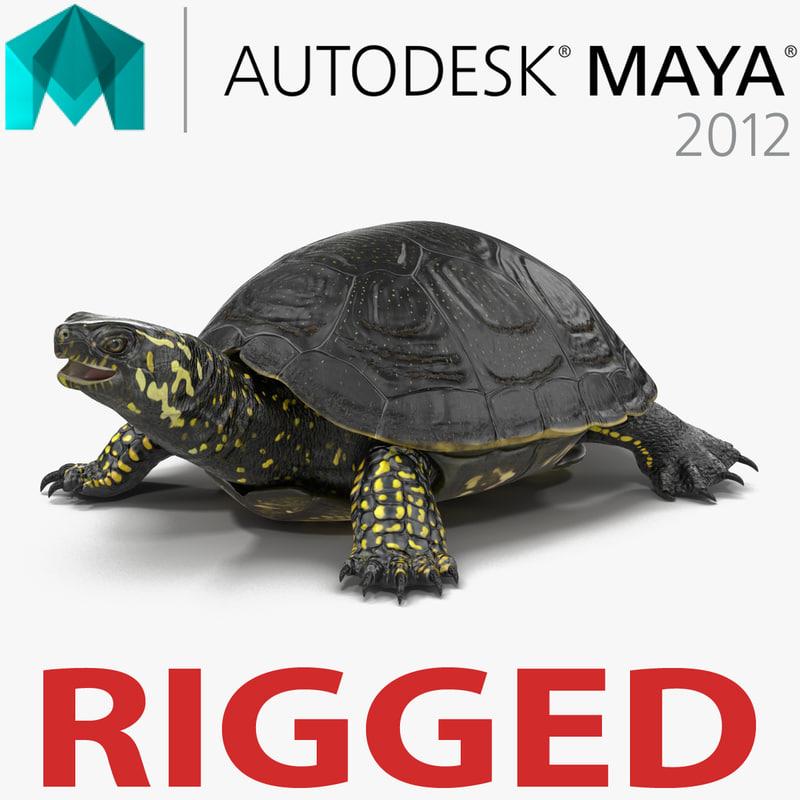 european pond turtle rigged 3d model